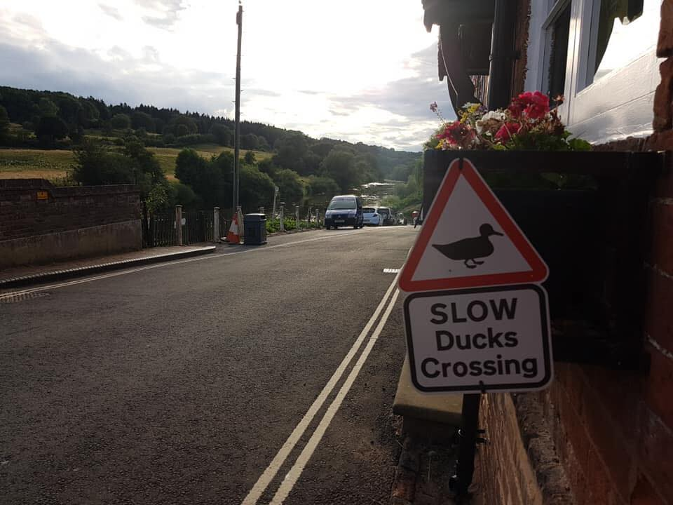 A red edged triangular road sign, with the wording, SLOW, DUCKS CROSSING, is at the side of a downhill tarmacked, double yellow lined road that follows the edge of the River Severn into the distance. There's a telegraph pole, two traffic cones and a litter bin on the far side of the road. A little way down the hill 3 cars are parked on the left. The vista to the left is edged by green fields and tall trees.