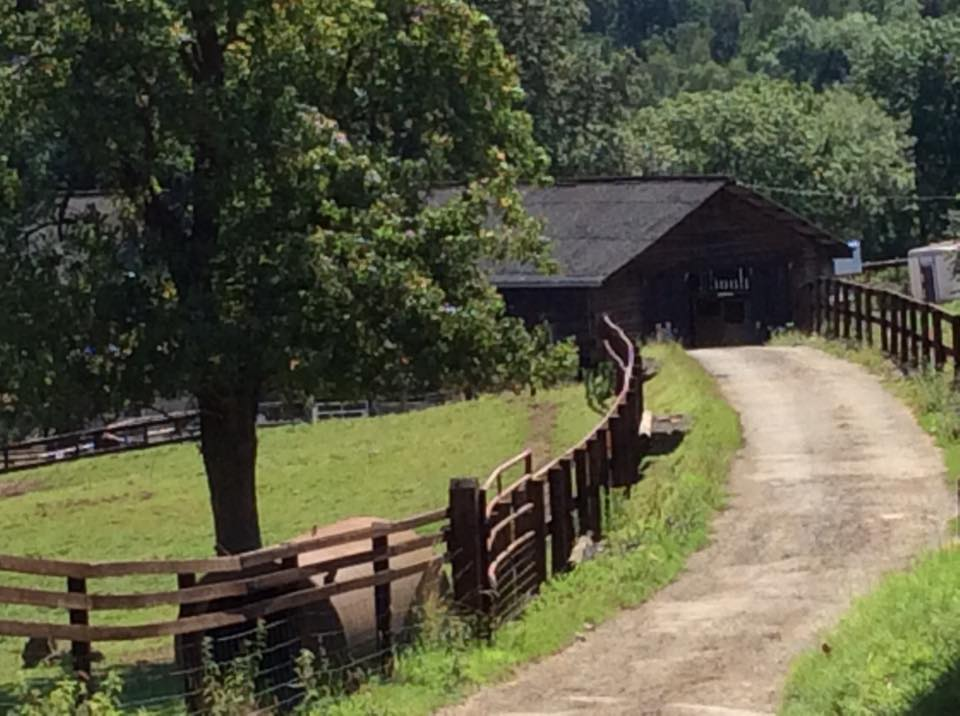 A rail edged drive leads down to Bank Farm stables, a dark brown timber clad large American styled horse riding barn building. The fence is matching the barns in colour and the pony grazing paddocks are lush and green .
